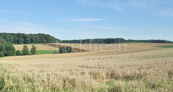 rural scenery in Hohenlohe Stock photo © prill