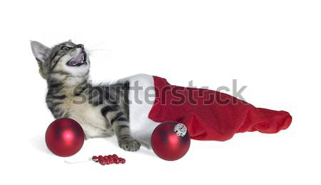 cat and christmas decoration Stock photo © prill