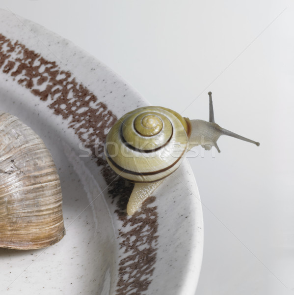 snails on a ceramic plate Stock photo © prill