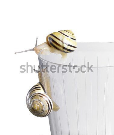 Grove snail on a drinking glass Stock photo © prill