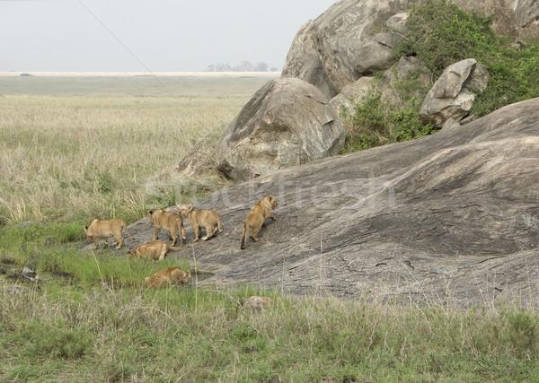 Genç kaya oluşumu Tanzanya Afrika manzara çevre Stok fotoğraf © prill