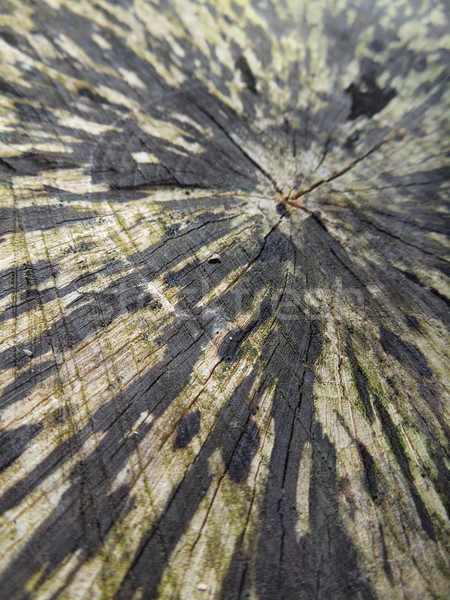 Stock photo: abstract wooden cut face