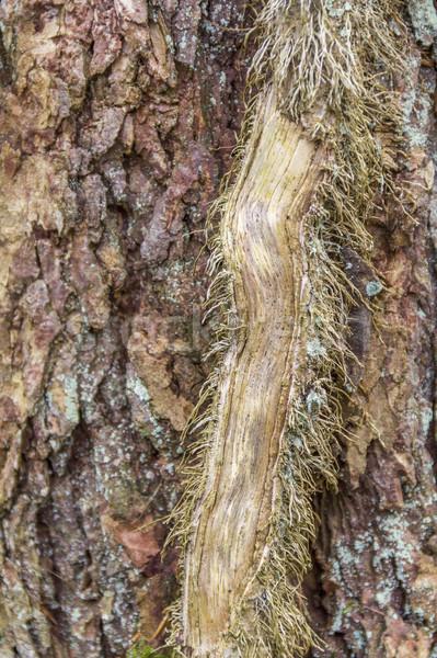 Sarmaşık kök doğal ahşap yeşil bitki Stok fotoğraf © prill