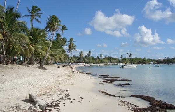 Dominican Republic beach scenery Stock photo © prill