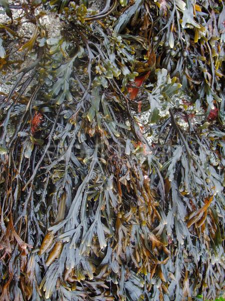 Vegetatie rotsformatie natuur zee groene plant Stockfoto © prill