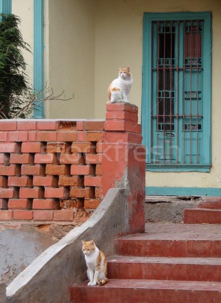 cats in Lima Stock photo © prill