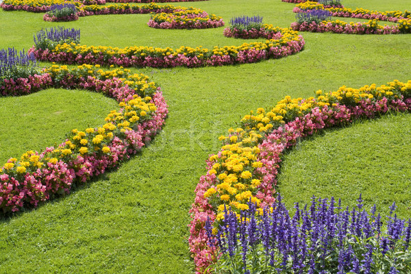 ornamental garden Stock photo © prill