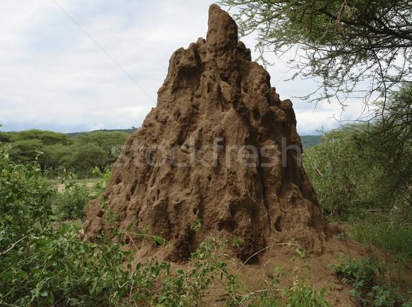 termite hill in Africa Stock photo © prill