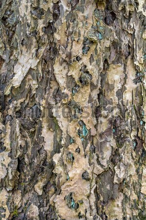 lichen on bark Stock photo © prill