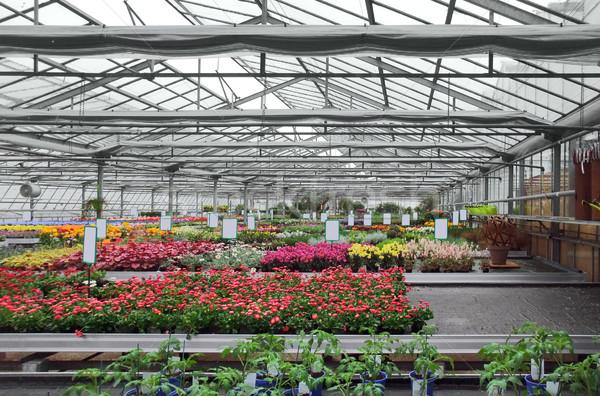 Greenhouse Stock photo © prill
