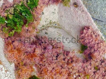 Marea dettaglio mare Ocean verde Foto d'archivio © prill