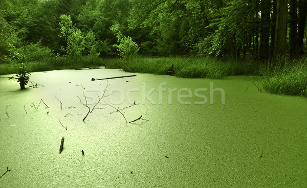 overgrown tarn in the forest Stock photo © prill