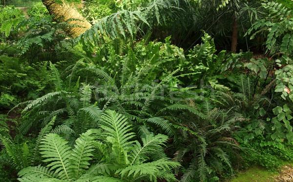 ジャングル 植生 風景 自然 フルフレーム ストックフォト © prill
