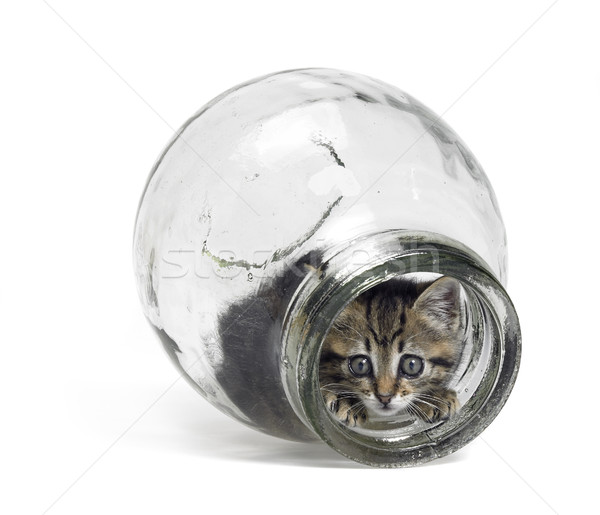 kitten looking out of a glass bottle Stock photo © prill