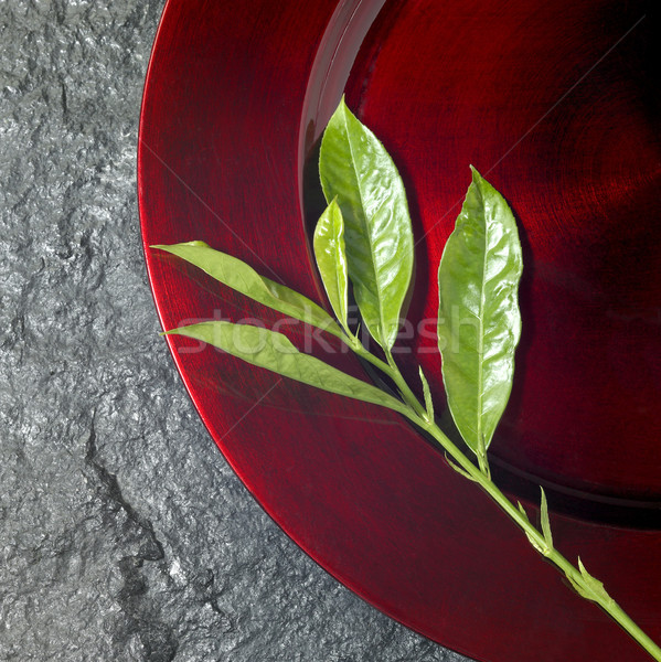 round red plate and green twig Stock photo © prill