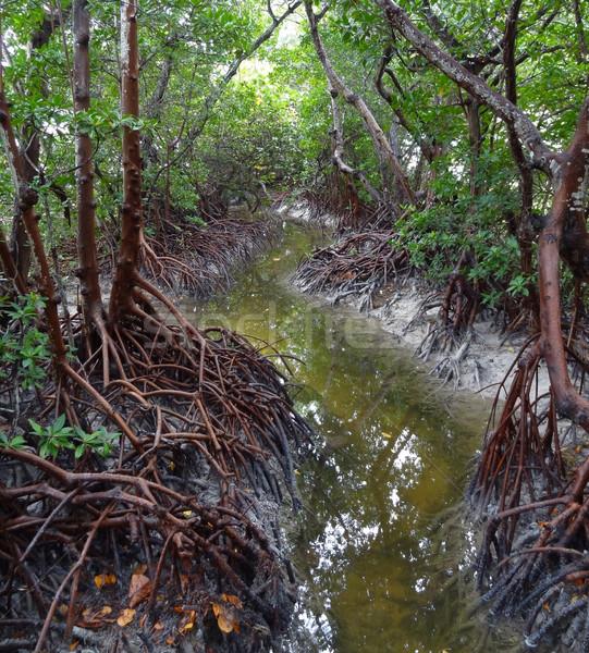 Forestales Florida EUA agua naturaleza planta Foto stock © prill