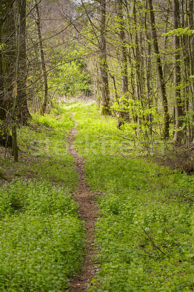 forest scenery with footpath Stock photo © prill