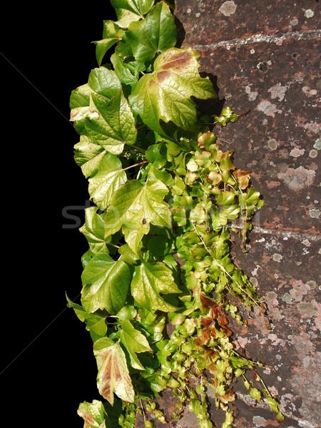 Winorośl słoneczny starych ściany czarny Zdjęcia stock © prill