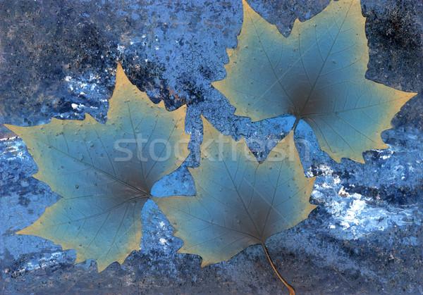 symbolic winter theme Stock photo © prill