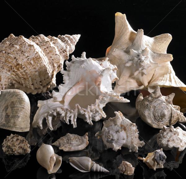sea snail houses Stock photo © prill