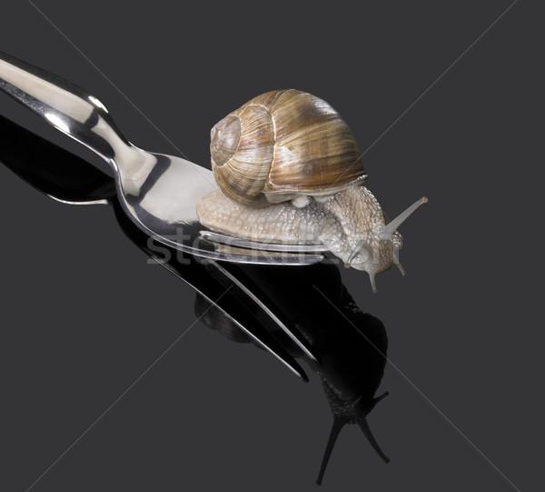 Grapevine snail on fork Stock photo © prill