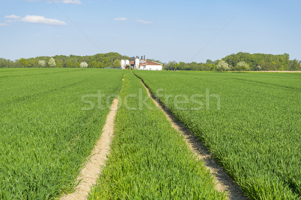 agricultural springtime scenery Stock photo © prill