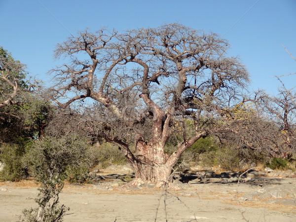 Châtaigne arbre île paysages pan Photo stock © prill