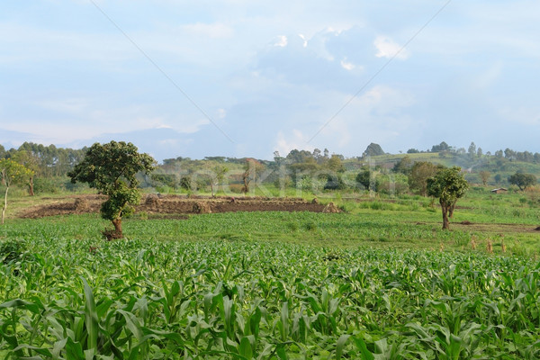 Stock photo: near Rwenzori Mountains in Uganda