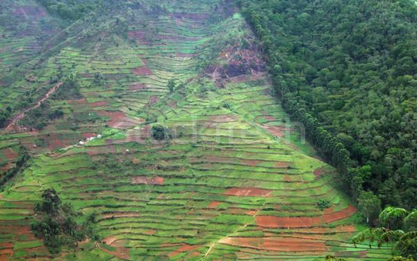 Fronteira floresta Uganda África Foto stock © prill