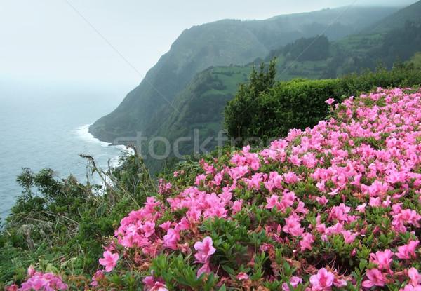 misty coastal scenery at the Azores Stock photo © prill