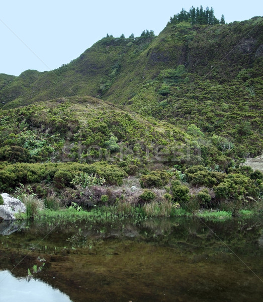 overgrown riparian scenery Stock photo © prill