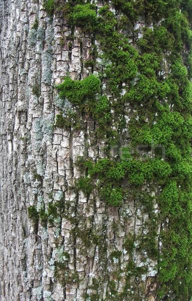 Havlama tam kare detay doğa arka plan bitki Stok fotoğraf © prill