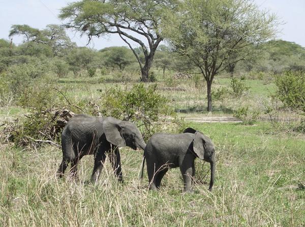 サバンナ 2 小さな 徒歩 タンザニア ストックフォト © prill