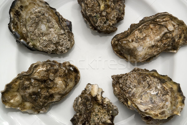 oysters on plate Stock photo © prill