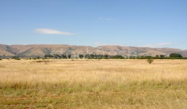 ゲーム リザーブ サバンナ 風景 南アフリカ 草 ストックフォト © prill