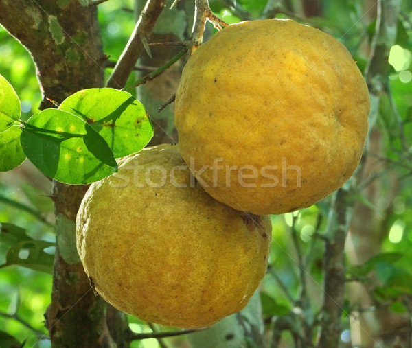 yellow fruits Stock photo © prill