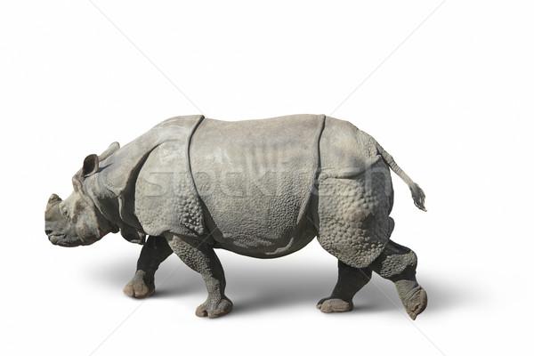 rhinoceros in white back Stock photo © prill
