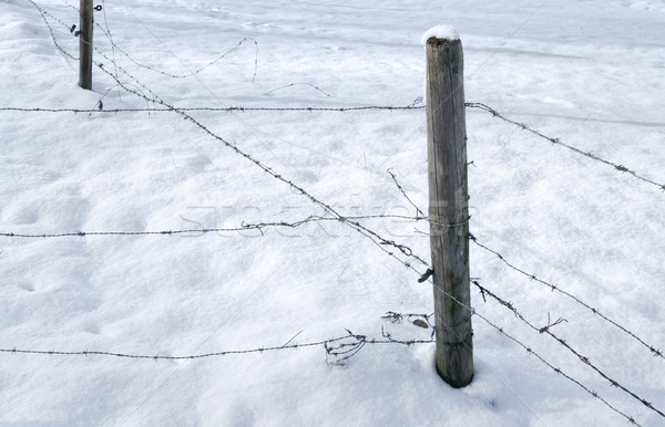 Prikkeldraad hek detail hout sneeuw draad Stockfoto © prill