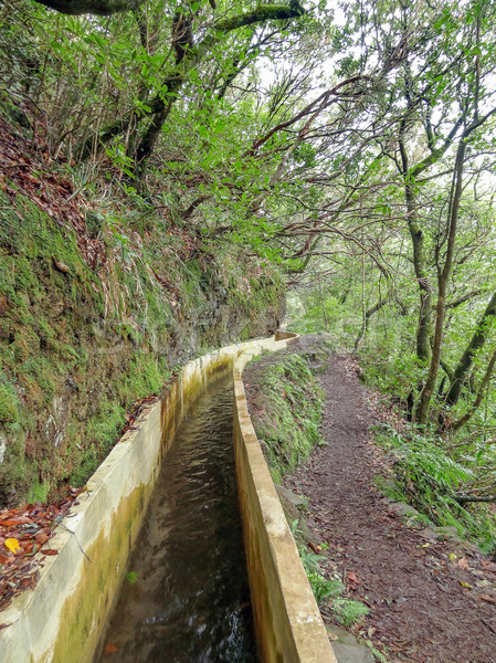 Kanal madeira ada su ağaç orman Stok fotoğraf © prill