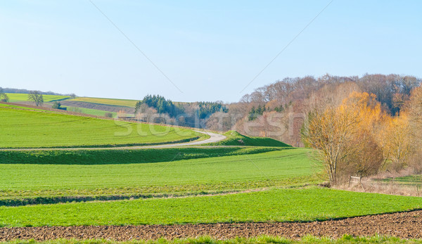 rural spring time scenery Stock photo © prill