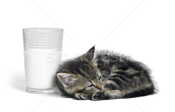 kitten besides a glass of milk Stock photo © prill
