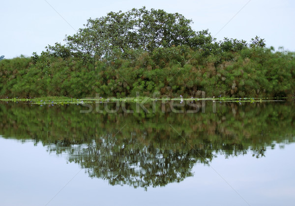 waterside view of the Lake Victoria near Entebbe Stock photo © prill