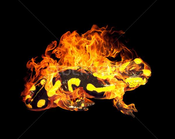 burning fire salamander Stock photo © prill