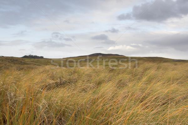 scottish hilly grassland Stock photo © prill