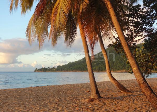 Zachód słońca plaży dekoracje idylliczny Karaibów Zdjęcia stock © prill