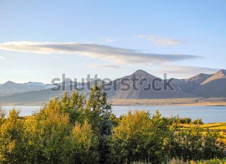 Természetes díszlet Izland fa fű tájkép Stock fotó © prill