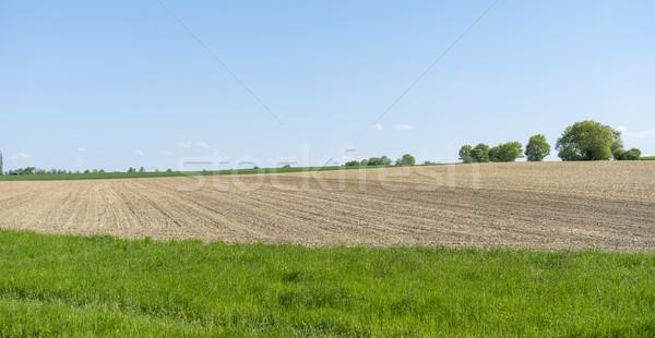 Słoneczny rolniczy dekoracje dziedzinie dzielnica południowy Zdjęcia stock © prill