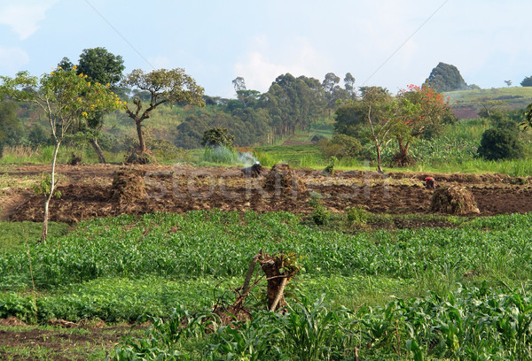 agriculture near Rwenzori Mountains Stock photo © prill