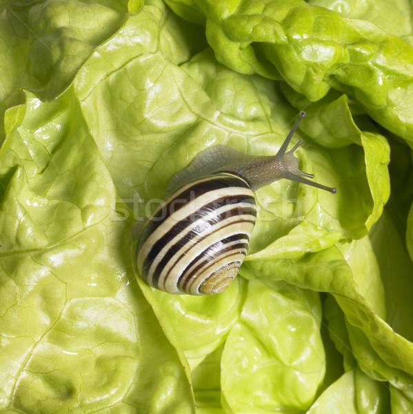 Bosje slak groene sla studio fotografie Stockfoto © prill