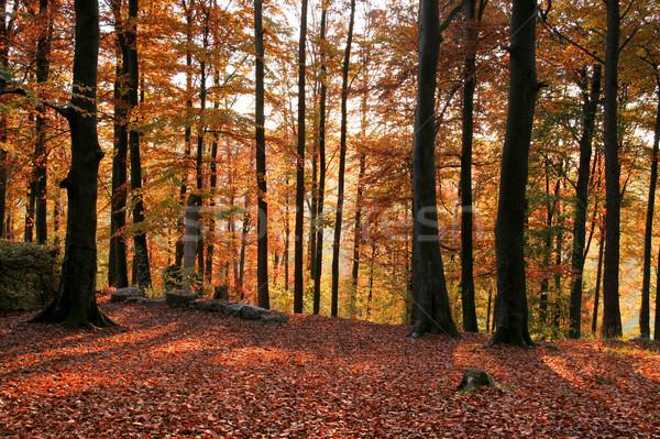 のどかな 秋 森林 風景 カラフル ストックフォト © prill